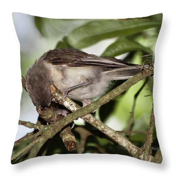 Where Did It Go Throw Pillow by DigiArt Diaries by Vicky B Fuller