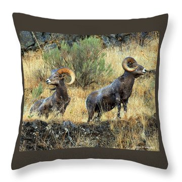 Where Did They Go? Throw Pillow