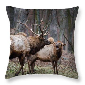 Where Have You Been? Throw Pillow