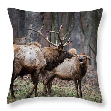 Where Have You Been? Throw Pillow by Andrea Silies