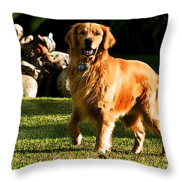 Where Is The Ball Throw Pillow