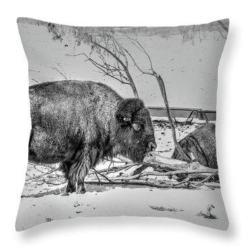Where The Buffalo Rest Throw Pillow