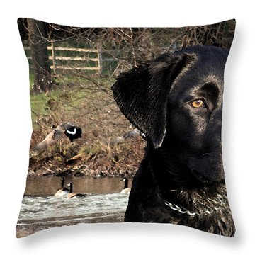 Where's The Geese Labrador 4 Throw Pillow by Cathy  Beharriell