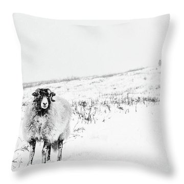 Which Way Is South? Throw Pillow