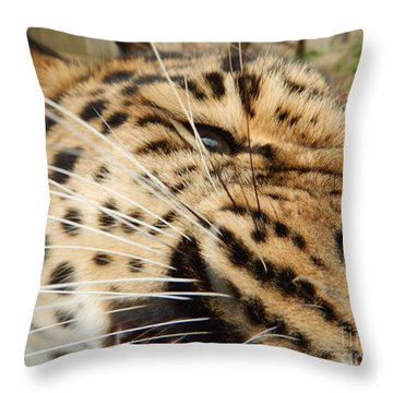 Whiskers  Throw Pillow by Gary Bridger