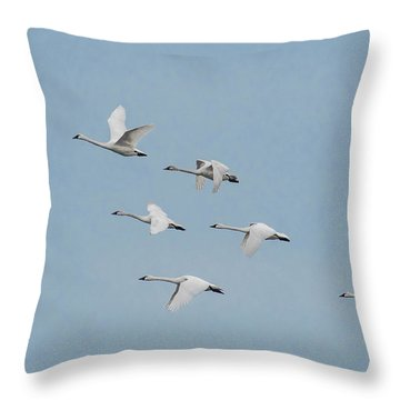 Whistling Swan In Flight Throw Pillow