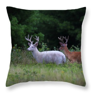 White And Brown Bucks Throw Pillow