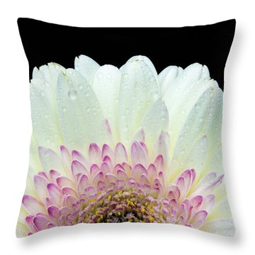 White And Pink Daisy Throw Pillow