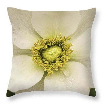 White Anemone Throw Pillow by Cathy Donohoue