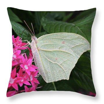 White Angled Sulphur #3 Throw Pillow
