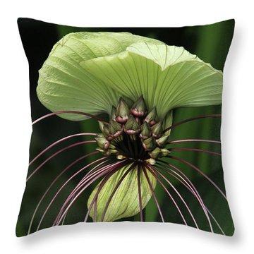 White Batflower Throw Pillow