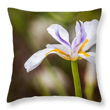 White Beardless Iris Throw Pillow