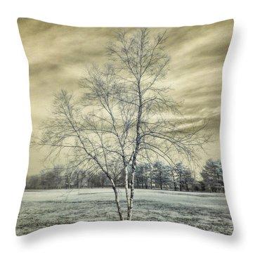 White Birch In Cantiague Park Throw Pillow