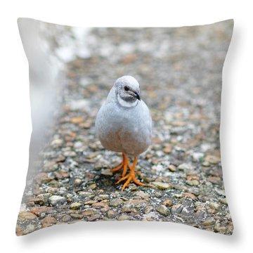 White Bird Sneaking Through Throw Pillow