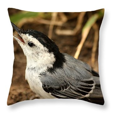 White Breasted Nuthatch 2 Throw Pillow