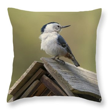 Nuthatch Throw Pillows