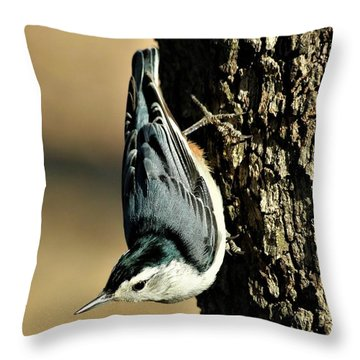 White-breasted Nuthatch On Tree Throw Pillow by Sheila Brown