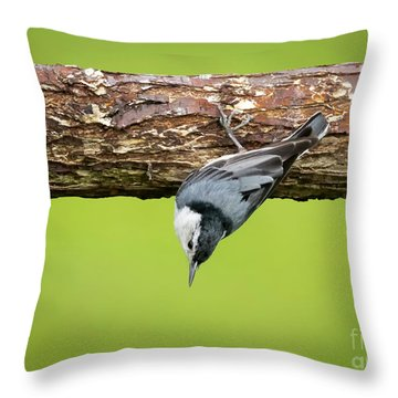 Throw Pillow featuring the photograph White-breasted Nuthatches by Ricky L Jones