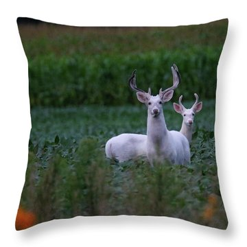 White Bucks Throw Pillow