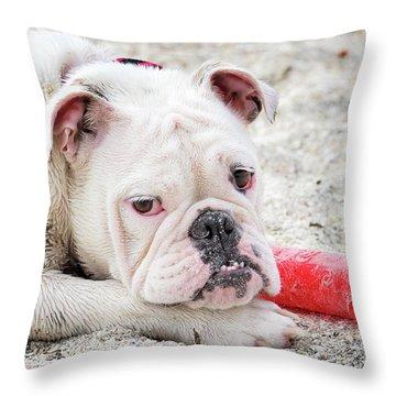 White Bull Dog Throw Pillow