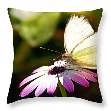 White Butterfly Throw Pillow