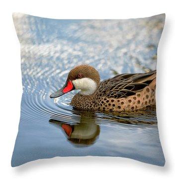 White-cheeked Pintail Throw Pillow