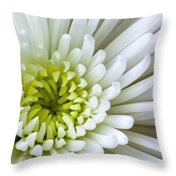 Throw Pillow featuring the photograph White Chrysanthemum by Richard J Thompson