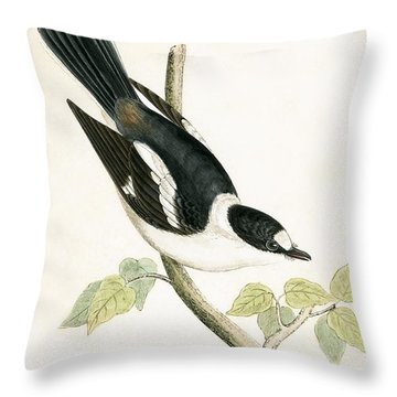 White Collared Flycatcher Throw Pillow by English School