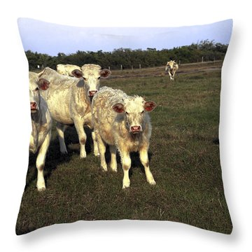 White Cows Throw Pillow by Sally Weigand
