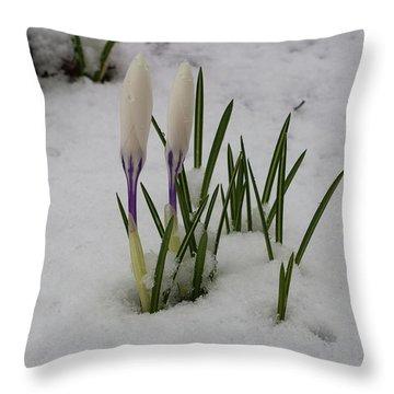 White Crocus In Snow Throw Pillow