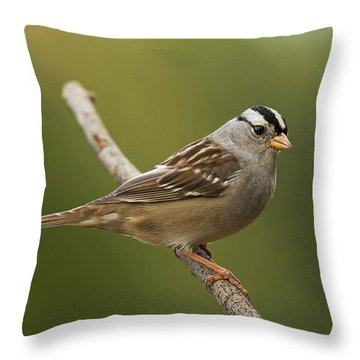 White-crowned Sparrow Throw Pillow by Doug Herr