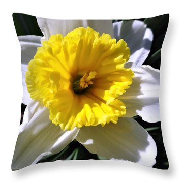 White Daffodil Closeup Throw Pillow