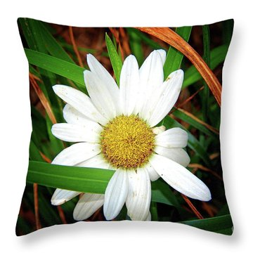 White Daisy Throw Pillow by Inspirational Photo Creations Audrey Woods