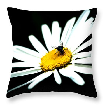 Throw Pillow featuring the photograph White Daisy Flower And A Fly by Alexander Senin