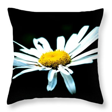 Throw Pillow featuring the photograph White Daisy Flower Black Background by Alexander Senin