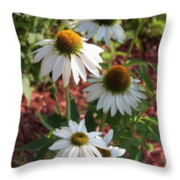 White Echinacea Throw Pillow by Suzanne Gaff