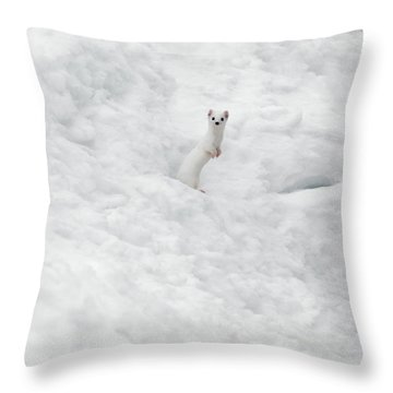 Weasels Throw Pillows