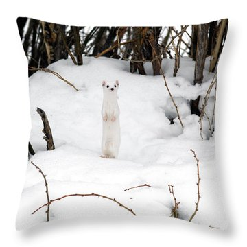 White Ermine Throw Pillow by Leland D Howard