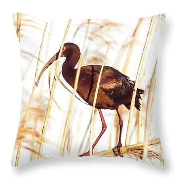 White Faced Ibis In Reeds Throw Pillow by Robert Frederick