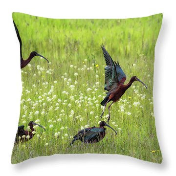 Throw Pillow featuring the photograph White-faced Ibis Rising, No. 1 by Belinda Greb