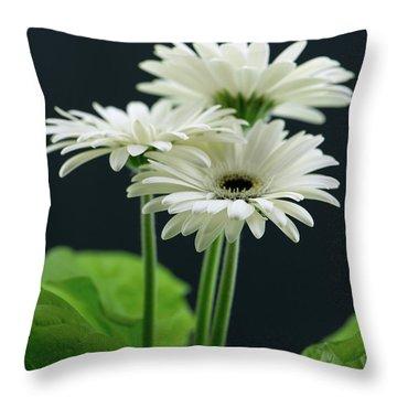 White Gerbers Throw Pillow
