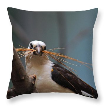 White-headed Buffalo Weaver Throw Pillow