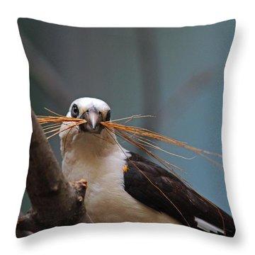 White-headed Buffalo Weaver Throw Pillow