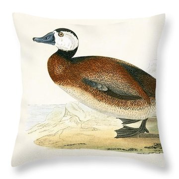 White Headed Duck Throw Pillow by English School