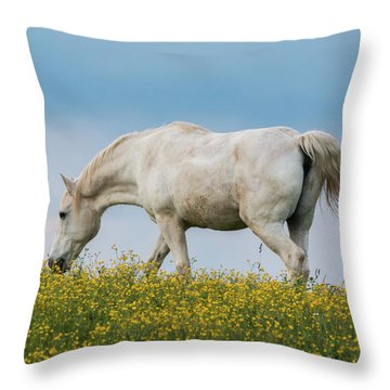 White Horse Of Cataloochee Ranch 2 - May 30 2017 Throw Pillow