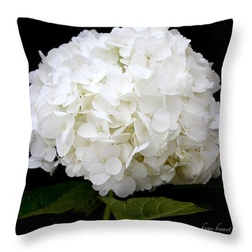 White Hydrangea Throw Pillow by Kume Bryant