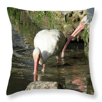 White Ibis Couple Throw Pillow