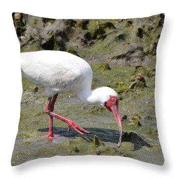 White Ibis Throw Pillow by Dan Williams