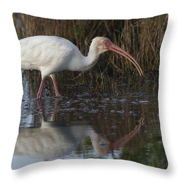 White Ibis Feeding Throw Pillow