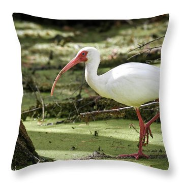 Throw Pillow featuring the photograph White Ibis by Gary Wightman